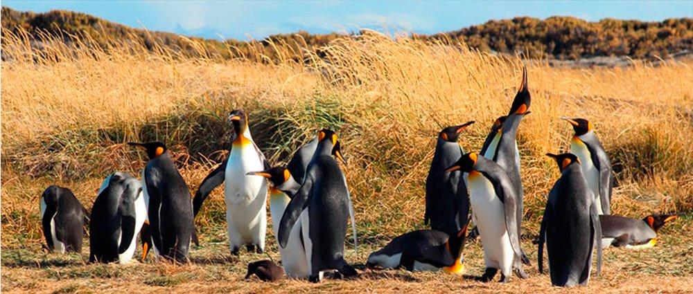 Tour Parque Pinguino Rey Todo Patagonia