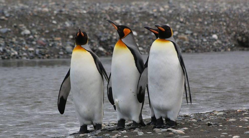 Tour Parque Pinguino Rey Tierra del Fuego
