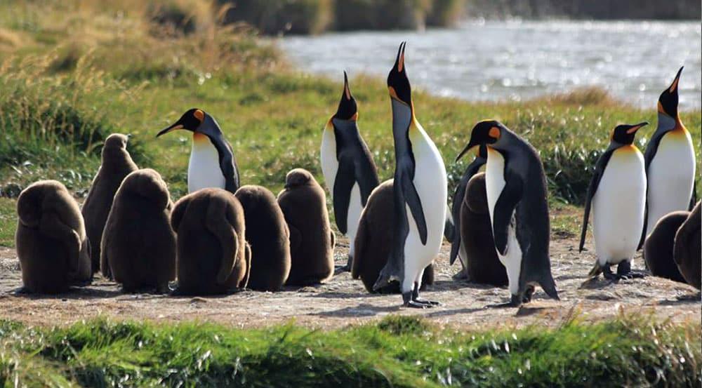 Full Day Parque Pinguino Rey Tierra del Fuego