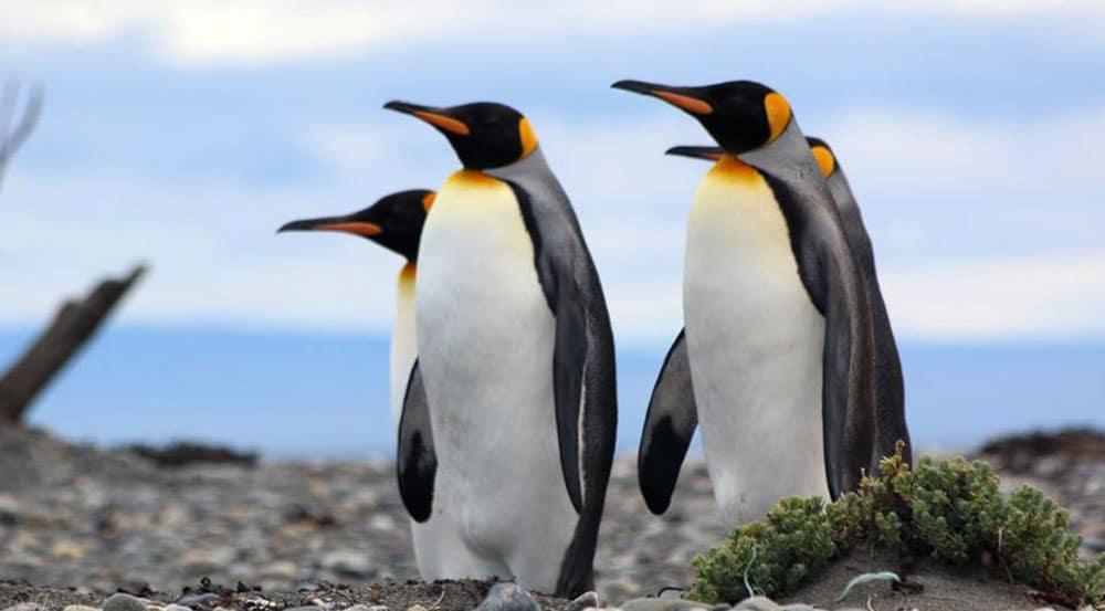 Excursion Parque Pinguino Rey Tierra del Fuego