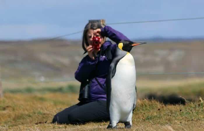 Parque Pinguino Rey Tierra del Fuego