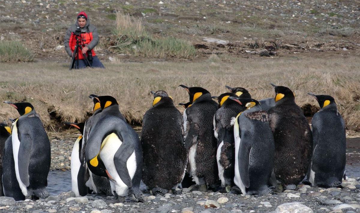 Tour Parque Pinguino Rey desde Puerto Natales