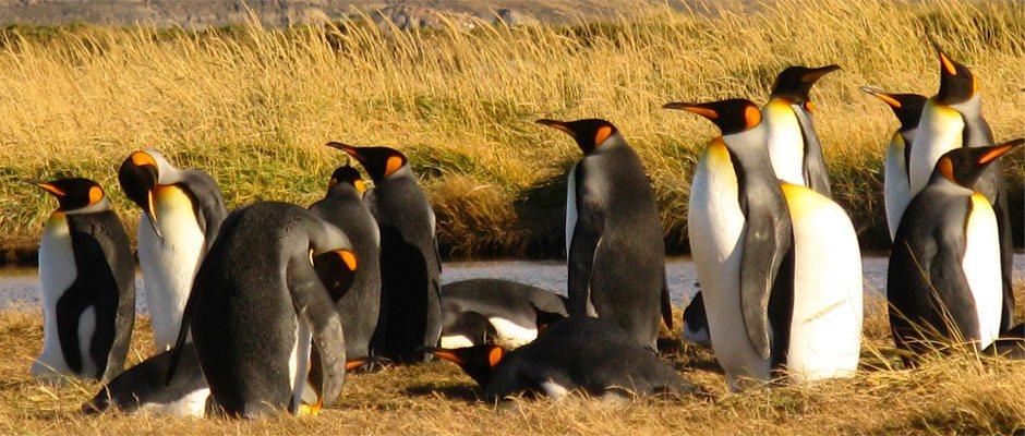 Parque pinguino rey tour